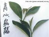Qing Xin (Green-centered) Oolong