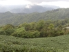 Mr. Yu Ban Zhang´s tea fields