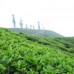 Aktuálně z Darjeelingu 3 – Phoobsering