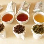 Produkce čaje z továrny Sandakphu