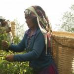 Nepálská zahrada Jun Chiyabari