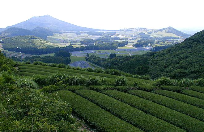 Kagoshima Tea Fields