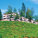 Nonaipara Tea Estate